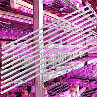 Фитолампа для растений T8 Led 60W  G13 1200mm  230V, фото 3
