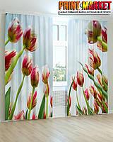 Фотошторы красно-белые тюльпаны