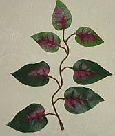 Лист фикуса маленький зеленый с фиолетовым