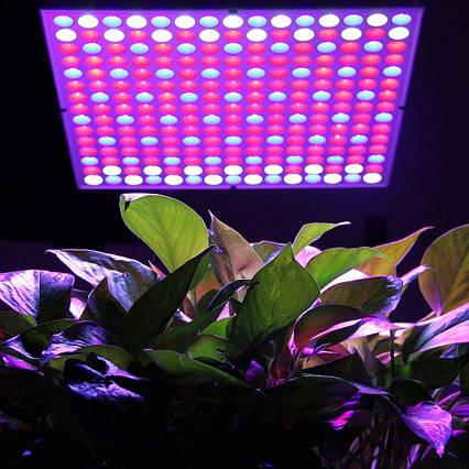 Фитопанель для растений 45W 169LED, фото 2