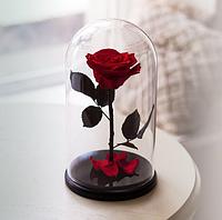 Роза в стеклянной колбе Алый рубин