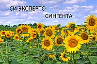 Семена подсолнечника СИ Эксперто Сингента (под Евролайтинг)