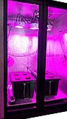 Гроубокс Укаина.Growbox Led 390 вт. с установками DWC.