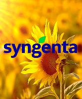 Семена подсолнечника Syngenta NK Neoma (Сингента НК Неома)