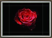 """Набор картина стразами КС-1030 """"Цветочная страсть"""" Crystal Art"""