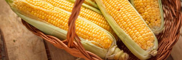 Семена кукурузы Пионер P8816