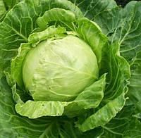 Семена капусты белокачянной Кевін F1