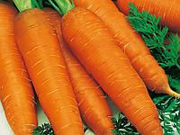 Семена моркови Редко