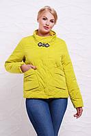 Яркая женская короткая демисезонная куртка без капюшона,большие размеры, салатовая Куртка 17-55