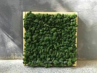 "Картина из мха ""Moss"""