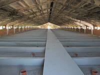 Строительство и реконструкция свиноводческих ферм.