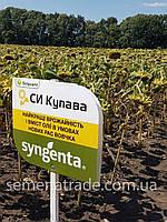 Подсолнечник Syngenta СИ Купава Среднеспелый (112 –116 дней) 2016г.