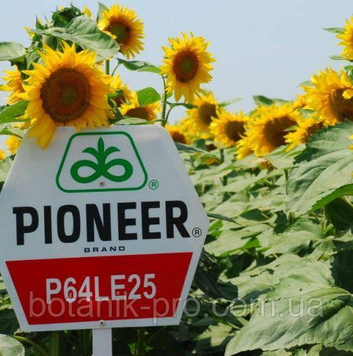 Семена подсолнечника Pioneer P64LE25 Круизер под Гранстар