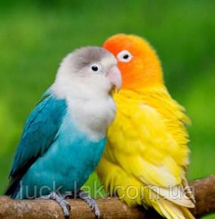 Алмазная вышивка попугайчики яркие 30х30 см, частичная выкладка