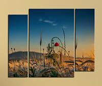 """Модульная картина """"Мак в поле"""", фото 1"""