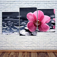 "Модульная картина ""Орхидея на камне"", фото 1"