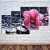 """Модульна картина """"Орхідея на камені"""""""
