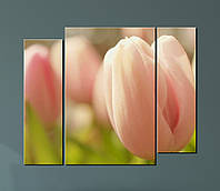 Модульная картина Розовые тюльпаны