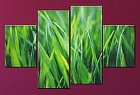"Модульна картина ""Зелена трава"", фото 1"