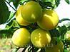 Саженцы  алычи  «Гек». (Желтая крупноплодная). (в). Подвой алыча.