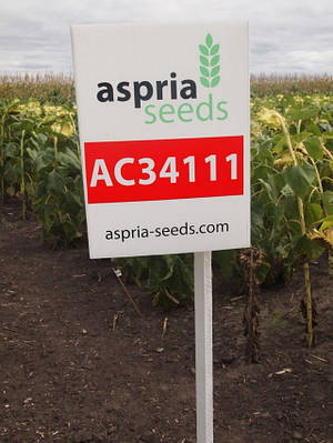 Семена подсолнечника АС34111 OR7