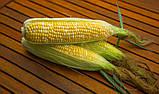 Семена сладкой кукурузы РАКЕЛЬ F1, 50 000 семян, фото 7
