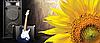 Семена подсолнечника ЕСТРАДА (A–G*)