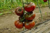 Семена томата БРОНЗОН F1, 250 семян