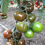 Семена томата БРОНСОН F1, 250 семян, фото 3