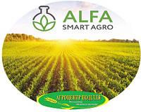 Семена кукурузы Лотар ФАО 210  2014 г.урожай