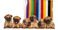Ошейники для домашних животных, цветные, нейлоновые