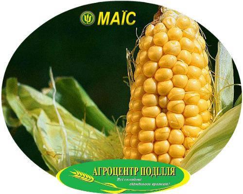 Посадочные семена кукурузы гибрид ДН Гарант ФАО 200