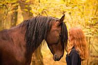 Золотая осень. И все о фотосессии с лошадью осенью.
