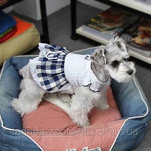 Платье для собак Dobaz Добаз, Toscana синий