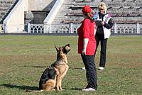 Дрессировка собак служебных пород по ОКД в Днепропетровске