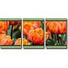 Модульная картина с тюльпанами ОРАНЖЕВЫЕ ТЮЛЬПАНЫ из 3 частей