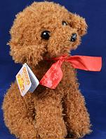 Мягкая игрушка Собака кучерявая с бантиком №A140-3 SO