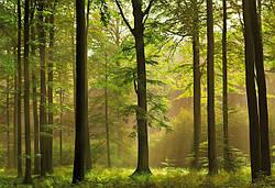 Переваги натурального дерева