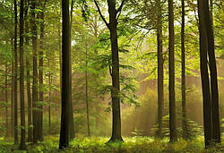 Преимущества натурального дерева