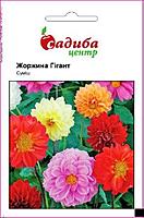 Насіння Квіти Жоржина Гігант 0,1 г 7916 Голандія, Хем Заден БВ