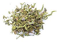 Вероника лекарственная, трава вероники 100 грамм (Veronica officinalis)