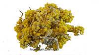 Бессмертник песчаный (Helichrysum arenarium, Сухоцвет) цветы 100 грамм