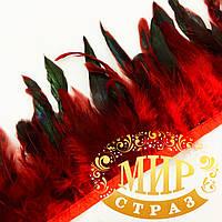 Тесьма перьевая (Петух), цвет Red, цена за 0,5м