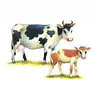 Познаем окружающий мир. Домашние животные. Дидактический материал, 978-5-9951-1228-0