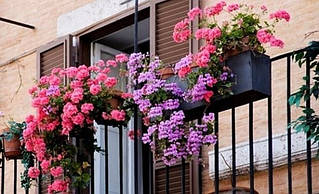 Балконні горщики, ящики для балконів і терас