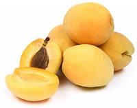 Шалах, Shalah саджанці абрикоса на сіянці жерделі