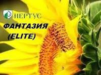 Семена подсолнечника ( Нертус ) Фантазия Элит