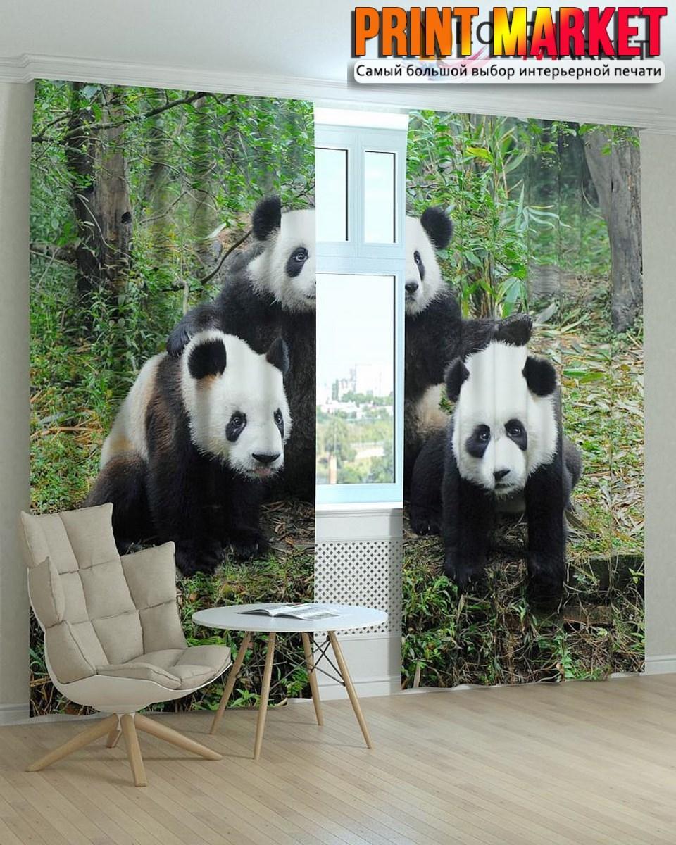 Фотошторы панды в лесу