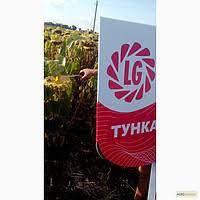 Семена подсолнечника Тунка ЛГ Limagrain (оригинал)