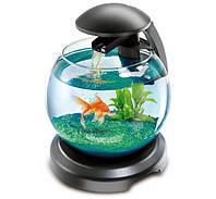 Аквариум Tetra Cascade Globe для петушка и золотой рыбки, черный и белый, 6.8 л